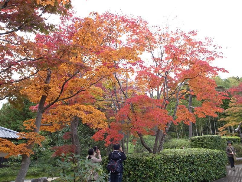 紅葉とピクニック@昭和記念公園へ