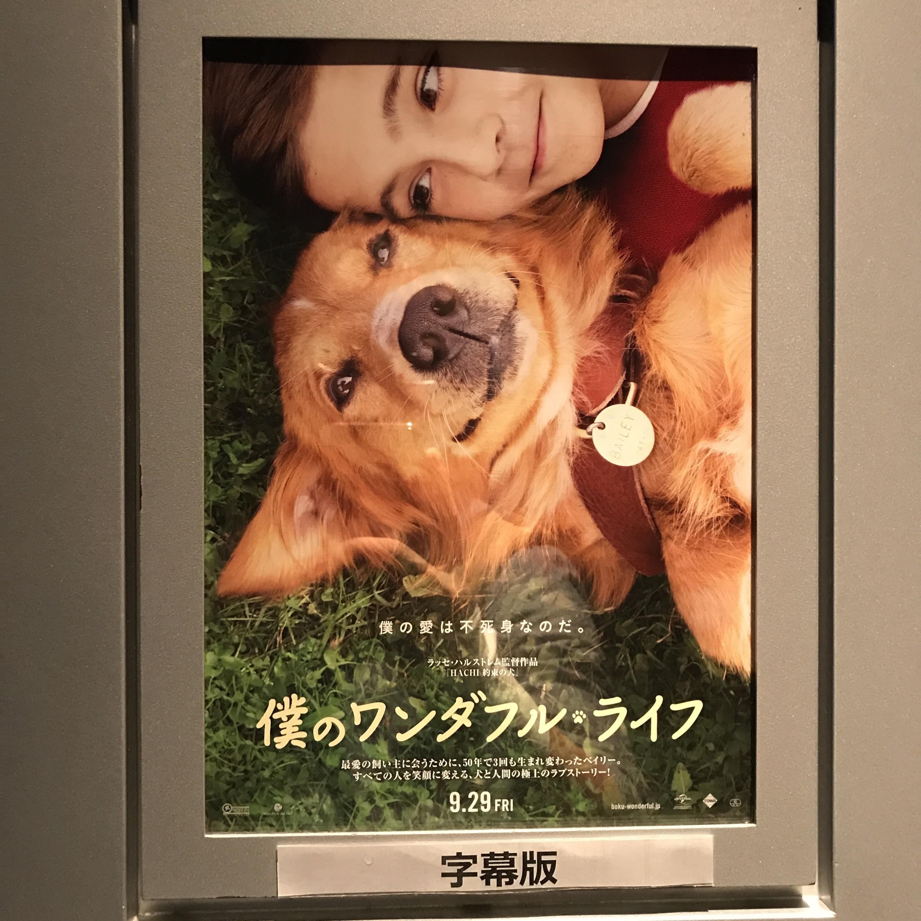 映画「僕のワンダフル・ライフ」を鑑賞!!<br>TOHOシネマズ1ヶ月フリーパス10本目